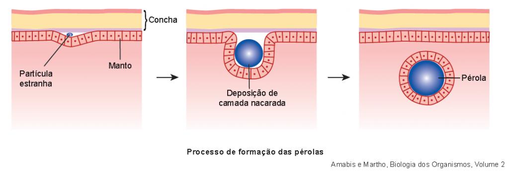 formação da pérola natural