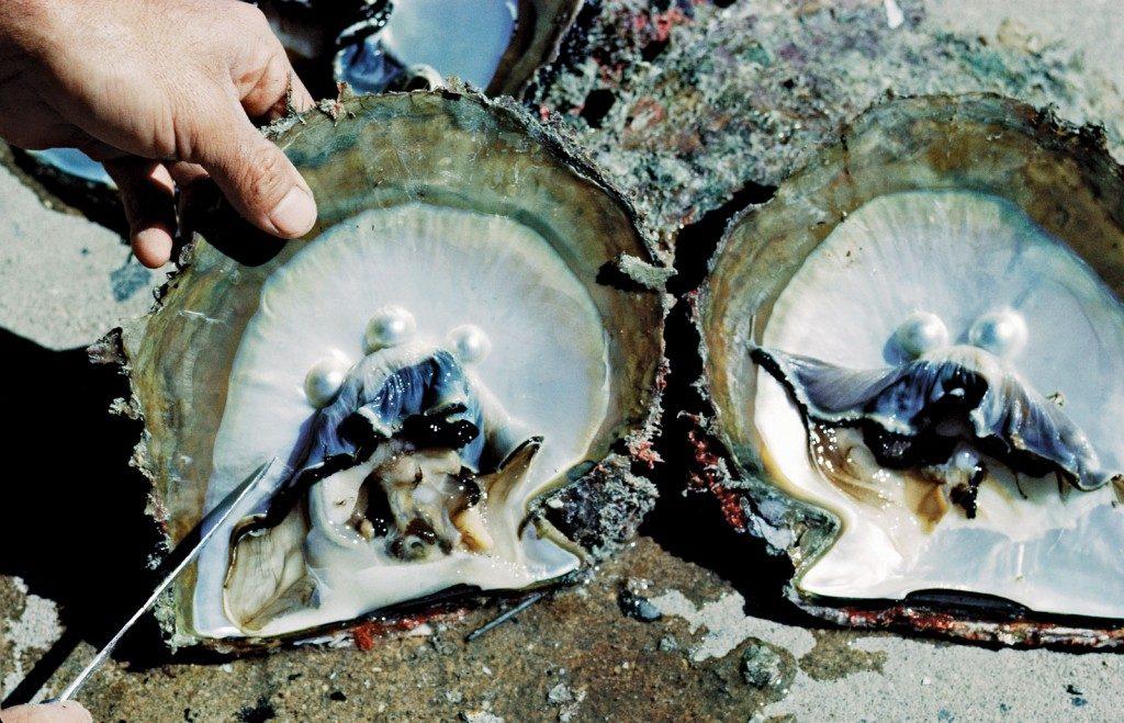 pérolas naturais na ostra